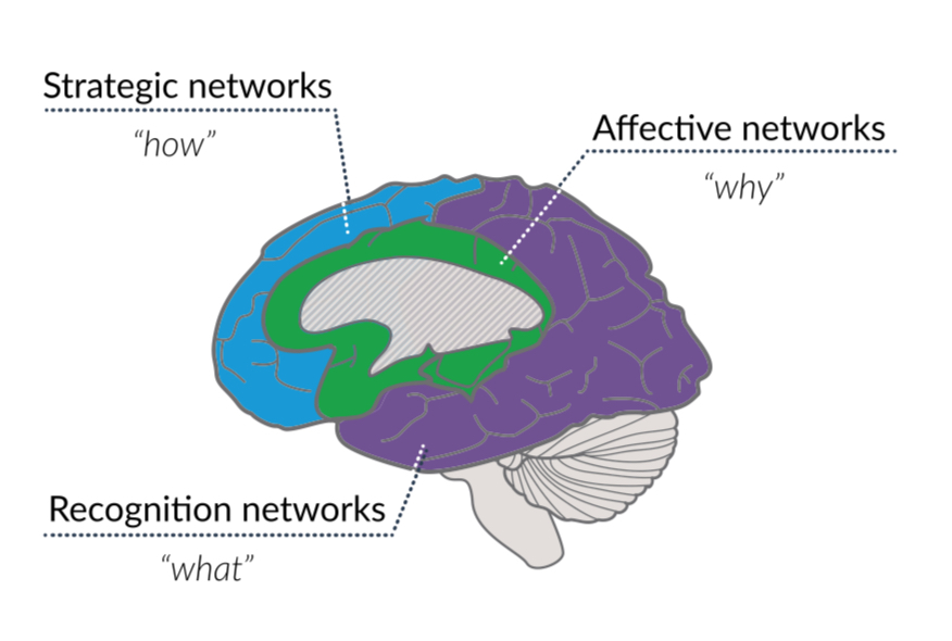 Showing the how, what and why of the brain structure.