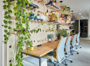 Image of desk pushed against wall with shelves of plants