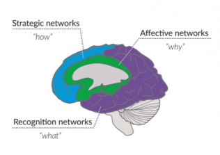 image of a brain with highlights for 3 strategic networks of Universal Design for Learning